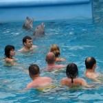 pływanie z delfinami, dominikana