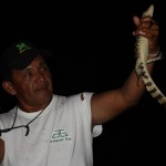 nocny połów kajmanów, amazonia / brazylia