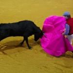 walka z bykiem, andaluzja / hiszpania