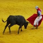 pokaz walki z bykiem